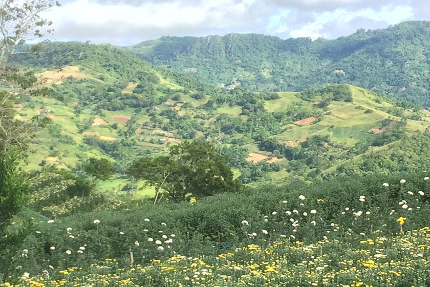 Diverse crop production systems in the middle central highlands (Cebu)